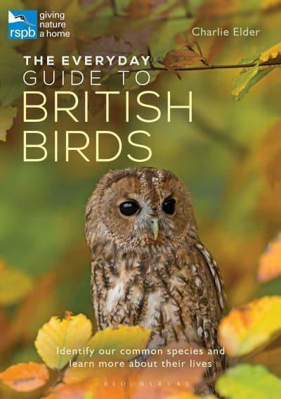 Jacket The Everyday Guide To British Birds