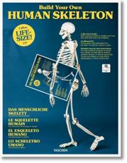 Build Your Own Human Skeleton - Life-Size!